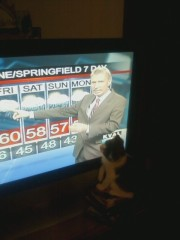 Cat Watches Al Do Weather