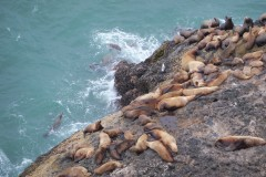 The Sea Lion Hangout