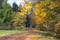 Autumn Colors on the West Bank Bike Path