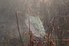Spider Webs in The Fog