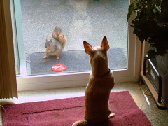 Dog and the Squirrel