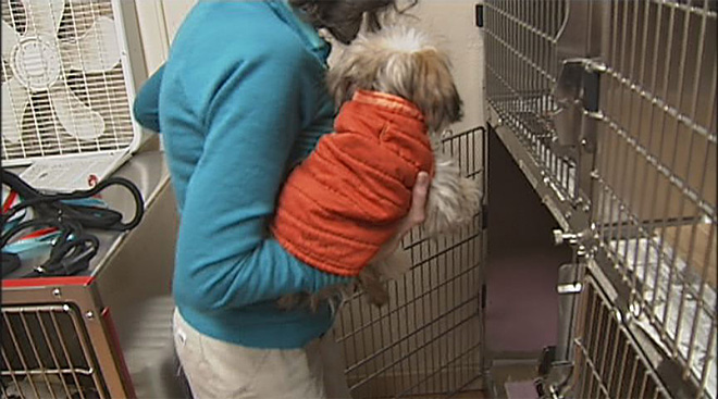 Spay and neuter clinic hits 25,000 mark: 'She's a big milestone!'