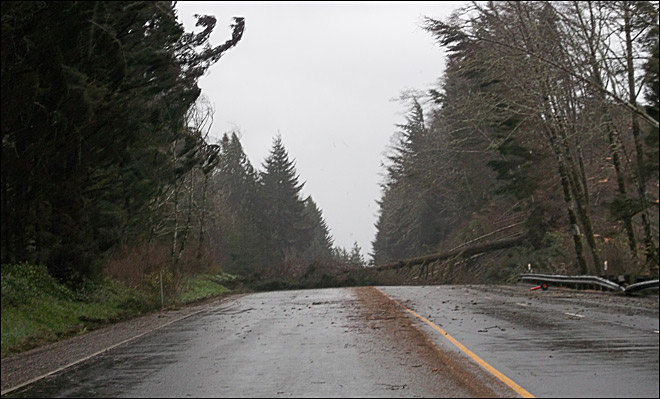 ODOT: 15-20 fallen trees close Highway 101 north of Reedsport