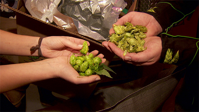 Some brewers of craft beers face hops shortage