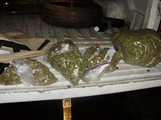 OSP makes two weed busts in southern Oregon