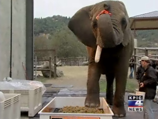 Oregon elephant goes from washing cars to making wine
