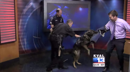 Springfield K9 Competition