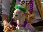 Barkus Parade: Mardi Gras has gone to the dogs