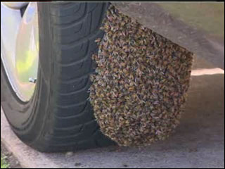 Bees removed from under truck