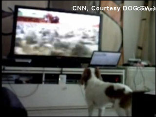 Dog TV launches nationwide