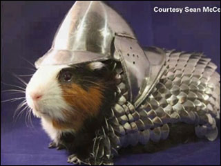 Suit of armor for guinea pig up for auction