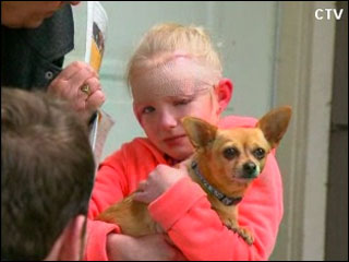 Chihuahua defends girl from pit bull
