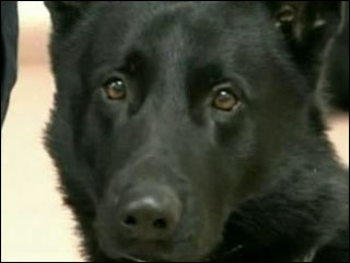 Police dog finds, then fires discarded handgun