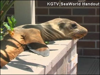 Sea lion pup found in garden