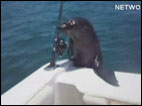 Seal jumps on boat with family