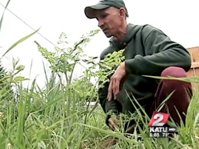 Toxic weed puts gardener in the hospital