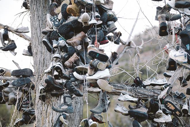 Oregon Shoe Tree