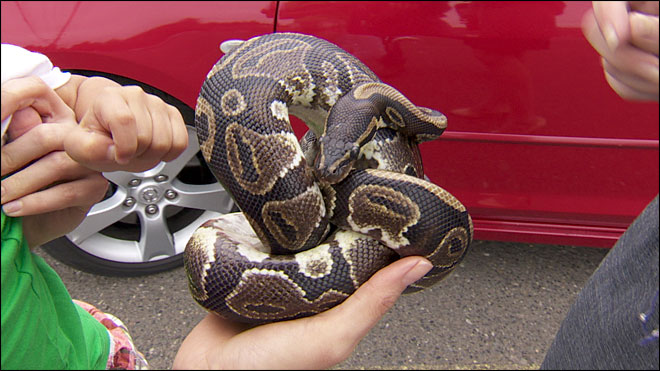 'I was very eager to be reunited with my snake'