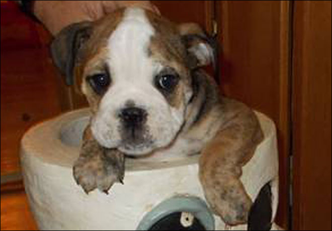 Deputies: Couple's puppy stolen at gunpoint
