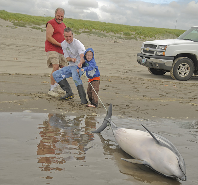 Dolphin washes ashore