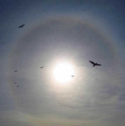 themom51 captures birds and sun halo near Coos Bay