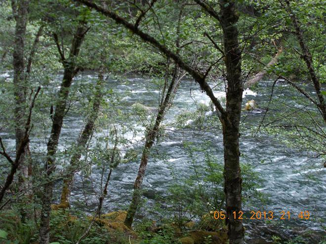 tree-in-river-Eagle-Rock-UmpquaNF-May-2103