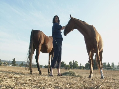 Horse owners warned of West Nile threat